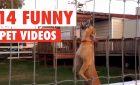 14 Humorous Pet Movies Compilation 2016  Viral Vids 1482639864 maxresdefault