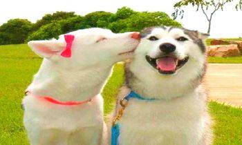 10 Humorous Husky Movies
